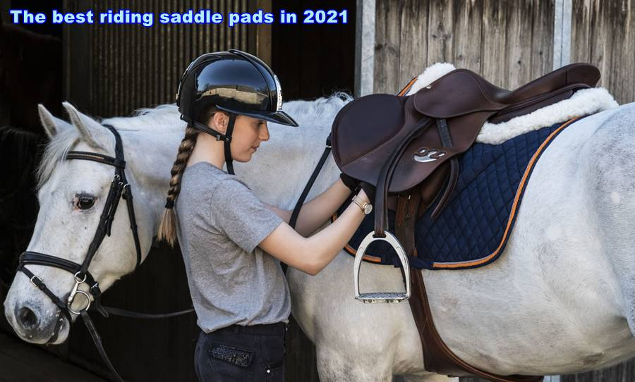 The best riding saddle pads in 2021